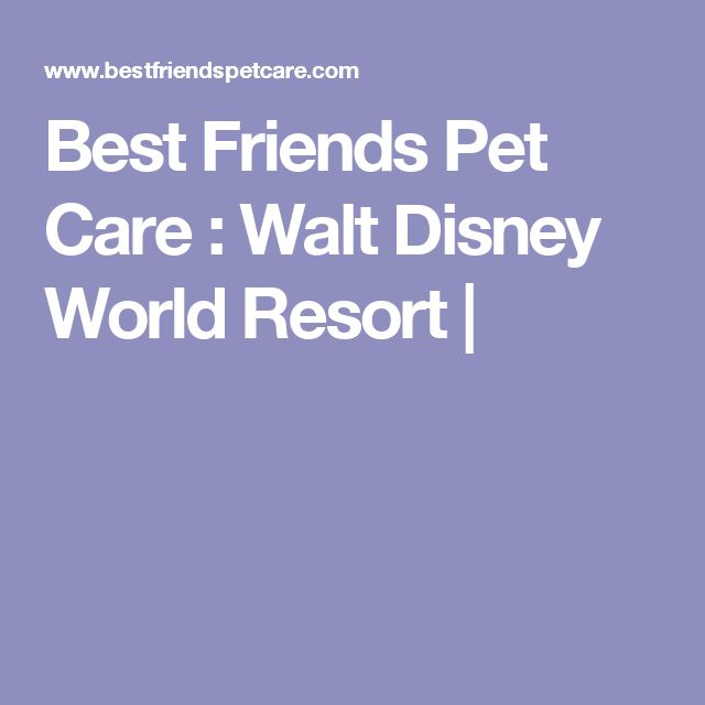 Best 25 pet resort ideas on pinterest dog boarding for Dog kennels near disney world