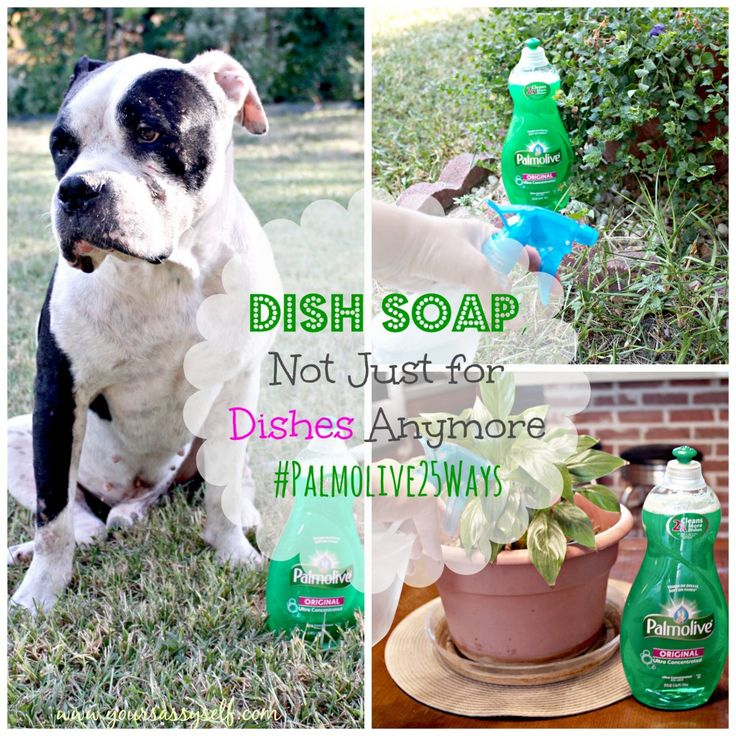 Check out the other uses for Palmolive Dish Soap.  It's Not Just for Dishes Anymore (hashtags-Palmolive25Ways, shop, cbias) » YourSassySelf.com