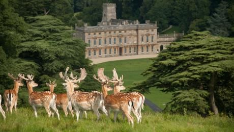 Bucks on the southern hill overlooking the East Front at Dyrham Park, Nr Bath, Gloucestershire, England. A stunning Baroque mansion built  in 1692 for William Blathwayt, Secretary of War and Secretary of State to William III. The rooms have little changed since they were furnished by Blathwayt.