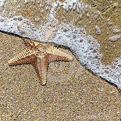 Estrela do mar na espuma da ressaca na costa
