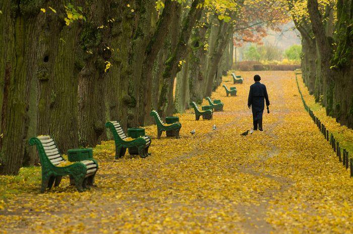 Владимир Буянов / Pentax K-5 II s / пейзаж, композиция, осень