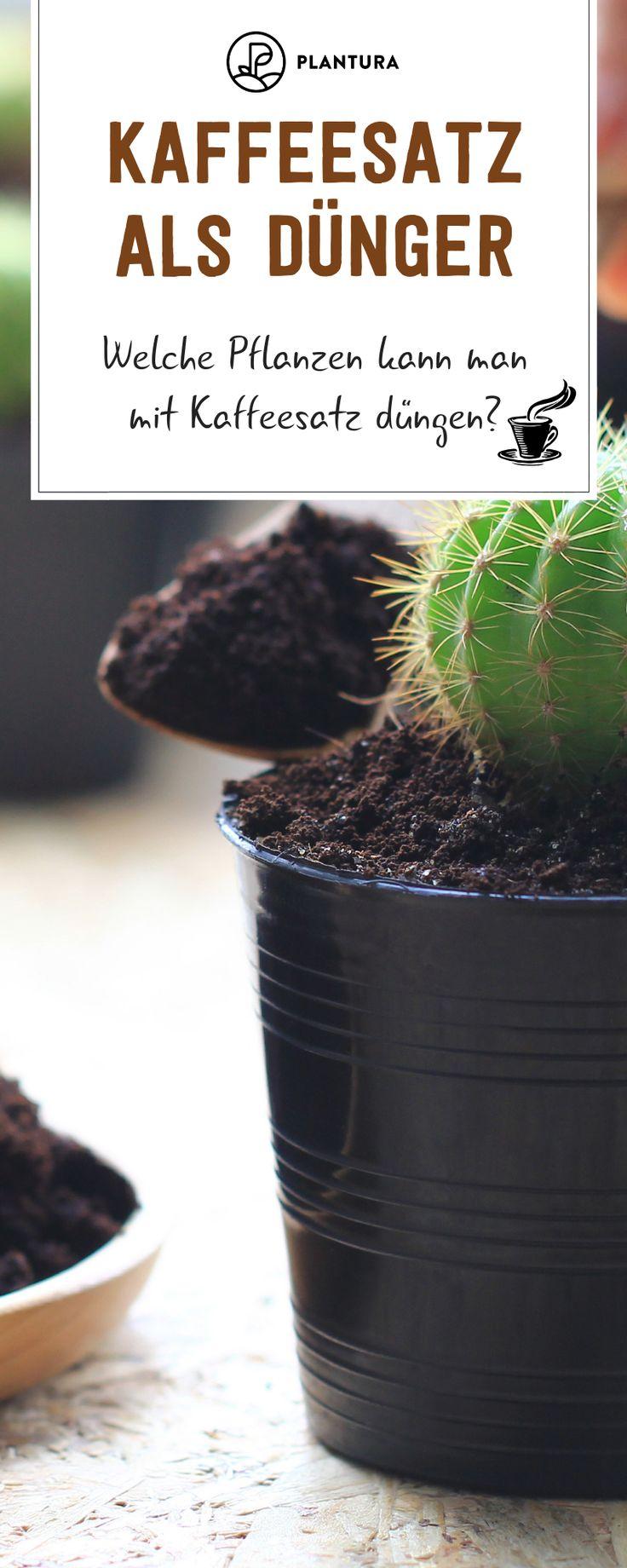 Kaffeesatz als Dünger: Welche Pflanzen kann man mit Kaffeesatz düngen? Kaffees…