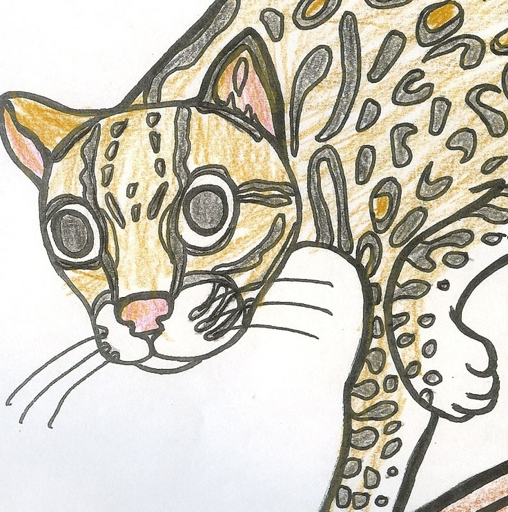 Coloring Pages Of Exotic Rainforest Animals Easy To