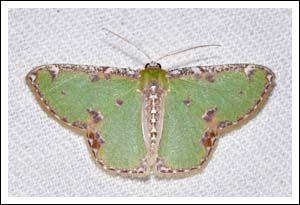 Holey Plains State Park. « Gippsland Mothing