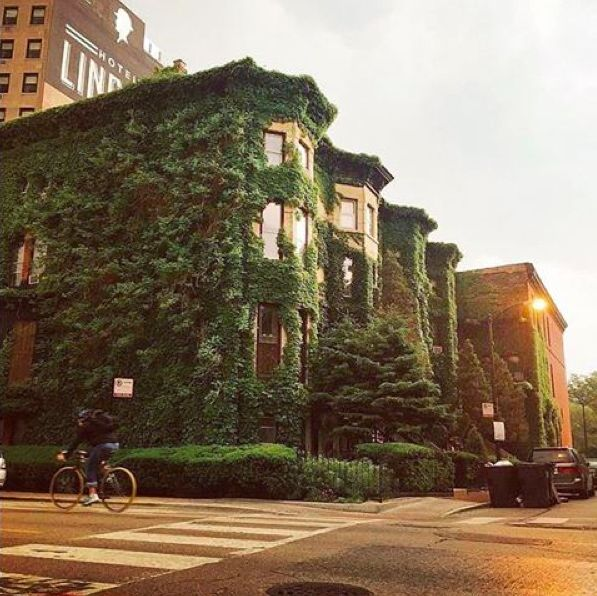 79 best hotel lincoln chicago images on pinterest for Boutique hotels chicago