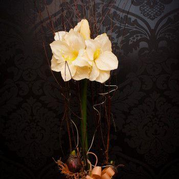 kompozycja kwiat amarylis