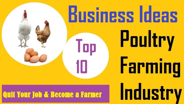 Top 10 Business Ideas In Poultry Farming Industry