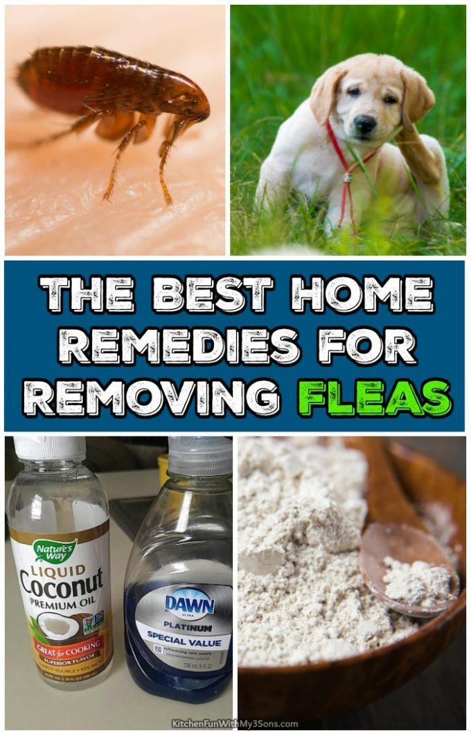 The Best Home Remedies For Removing Fleas That Actually Work Home Remedies For Fleas Flea Remedies Natural Cough Remedies