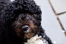 sharetweetsharesharesharepin itsharesharesharesharepockete-mailprintrss feedinfoBo (geboren am 9. Oktober 2008) ist ein Hund der ehemaligen ...
