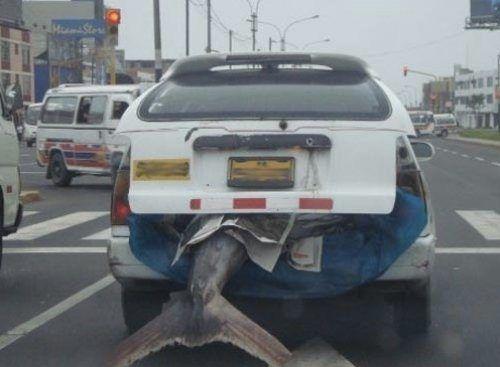 totally not suspicious #sharks #funny #driving #vigorelle