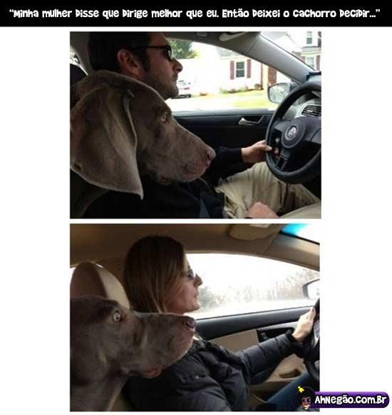 cachorros sabem das coisas
