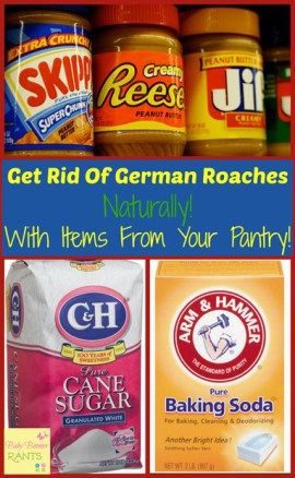 How To Get Rid Of German Roaches Naturally