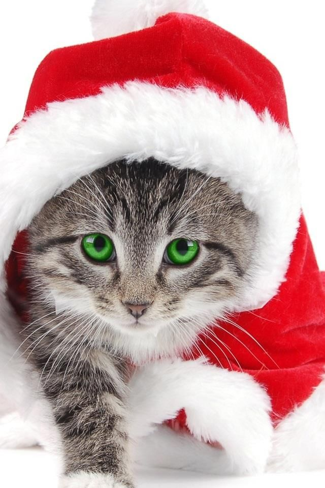 53 CHRISTMAS IPHONE WALLPAPERS TO DOWNLOAD WITHOUT COST | Vánoce - Santa |  Pinterest | Christmas cats, Kittens a Cats - 53 CHRISTMAS IPHONE WALLPAPERS TO DOWNLOAD WITHOUT COST Vánoce