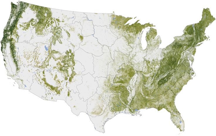 map of us trees | nasa