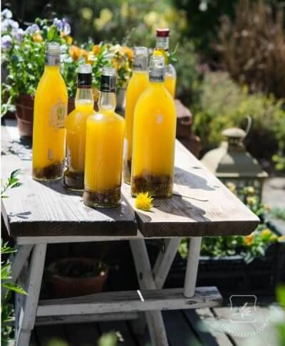 A while back we featured a post about harvesting and using dandelion roots. The post is very popular, but loads of people have asked about making dandelion wine. As the dandelions are young and tender, and popping up everywhere right now, I thought the timing was right to feature a recipe for dandelion wine. I …
