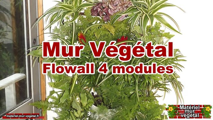 Vidéo de présentation d'un mur végétal intérieur réalisé avec 4 kits Flowall et un système d'arrosage automatique, ce pack est disponible sur notre boutique ...