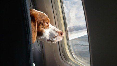 Ammettere i cani in cabina dell'aereo con i loro padroni: QualaZampa firma la petizione :http://www.qualazampa.news/2015/10/02/ammettere-i-cani-in-cabina-dellaereo-con-i-loro-padroni-qualazampa-firma-la-petizione/