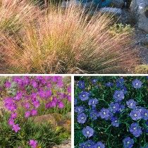 My Soil Is Like A Beach Collection High Country Gardens