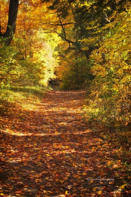 Autumn Colours 3 - MacKenzie-King Estate