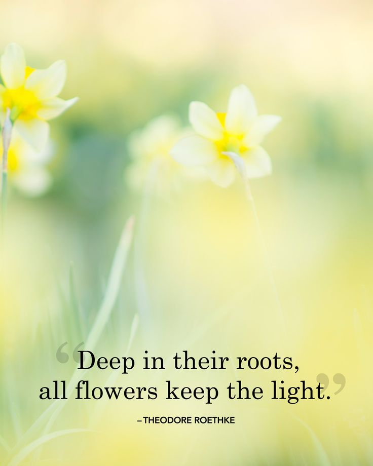"""Deep in their roots, all flowers keep the light.""   - countryliving.co.uk"