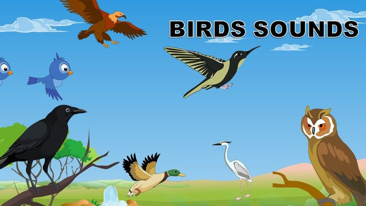 Sounds of birds | Birds sounds in the morning for babies | Kindergarten ...