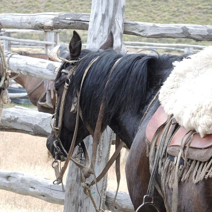 #horseridingpatagonia #horse #horseriding #patagonia #holiday #vacation #horsebackriding #ridingholiday #torresdelpaine #guachos #glaciers