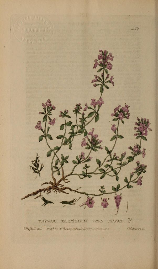 British phaenogamous botany,. Oxford,Published by the author, sold by J.H. Parker [etc.]1834-43.. biodiversitylibrary.org/page/48855893