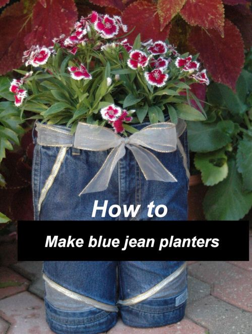 I've seen these full size on a balcony once very eye catching. -DIY Blue Jean Planters - http://thegardeningcook.com/diy-blue-jean-planters/