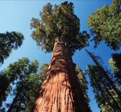 Un'immagine che ritrae il variegato paesaggio naturale della California. Siamo all'interno del Sequoia National Park, nella parte meridionale della Sierra Nevada, dove si trovano alcune delle sequoie più grandi e antiche del mondo.
