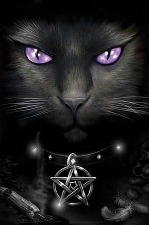 Star of Starclan and Dark of The Dark Forest A8992432d15d86d6957ceb83176eb241