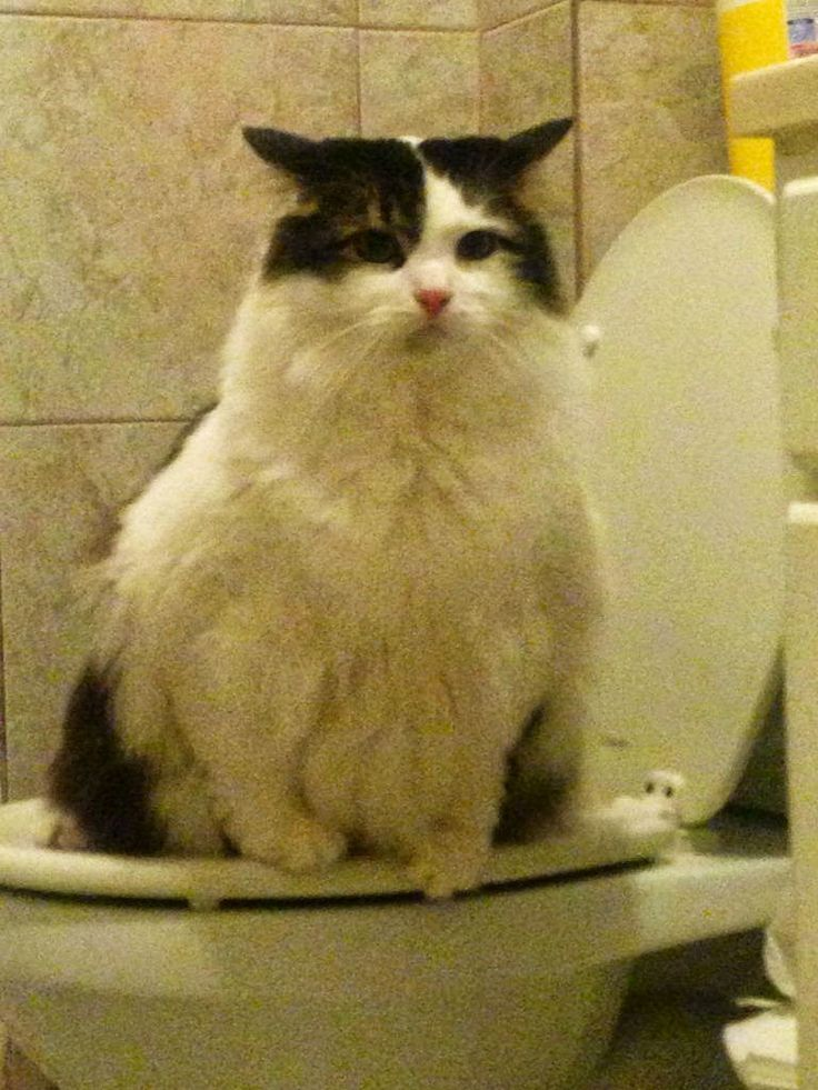 Quot Can I Have Privacy Please Quot Lovely Cats Pinterest