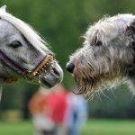 Cavalli, segugi e dita nel naso... così nasce un blog senza capo nè coda... http://ilditonelnaso.net/?p=17