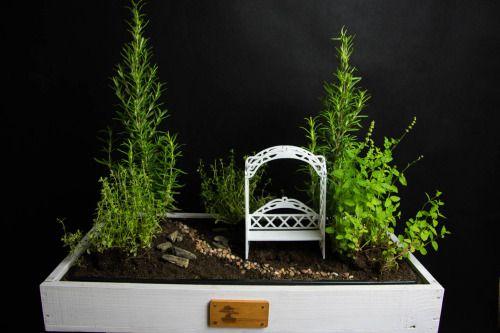 Mini ogródek ziołowy:) Szybko się robi. Nie jest skomplikowany, nie ma wielu szczegółów i niuansów, ale jest praktyczny i cieszy oko:)