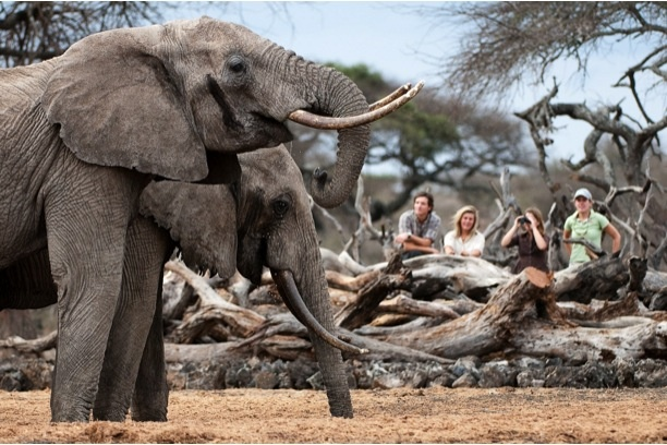 walking safaris in Africa are a must!