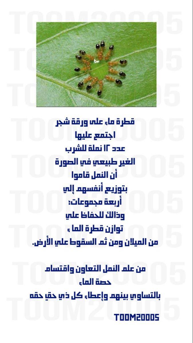 سبحان الله الحمدالله Herbs Ale