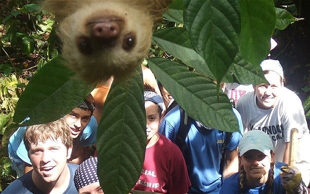"Here's a ridiculously cute picture of a group of people being photobombed by a baby sloth in Costa Rica.""As I looked through the camera lens I could see something creeping in to the frame. When I realized it was a baby sloth I clicked the button as fast as I could, not that he was going anywhere fast """
