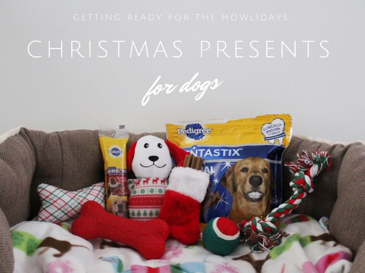 Dog Gift Ideas Part - 30: Getting Ready For The Howlidays: Christmas Presents For Dogs + Gift Ideas  For Pets