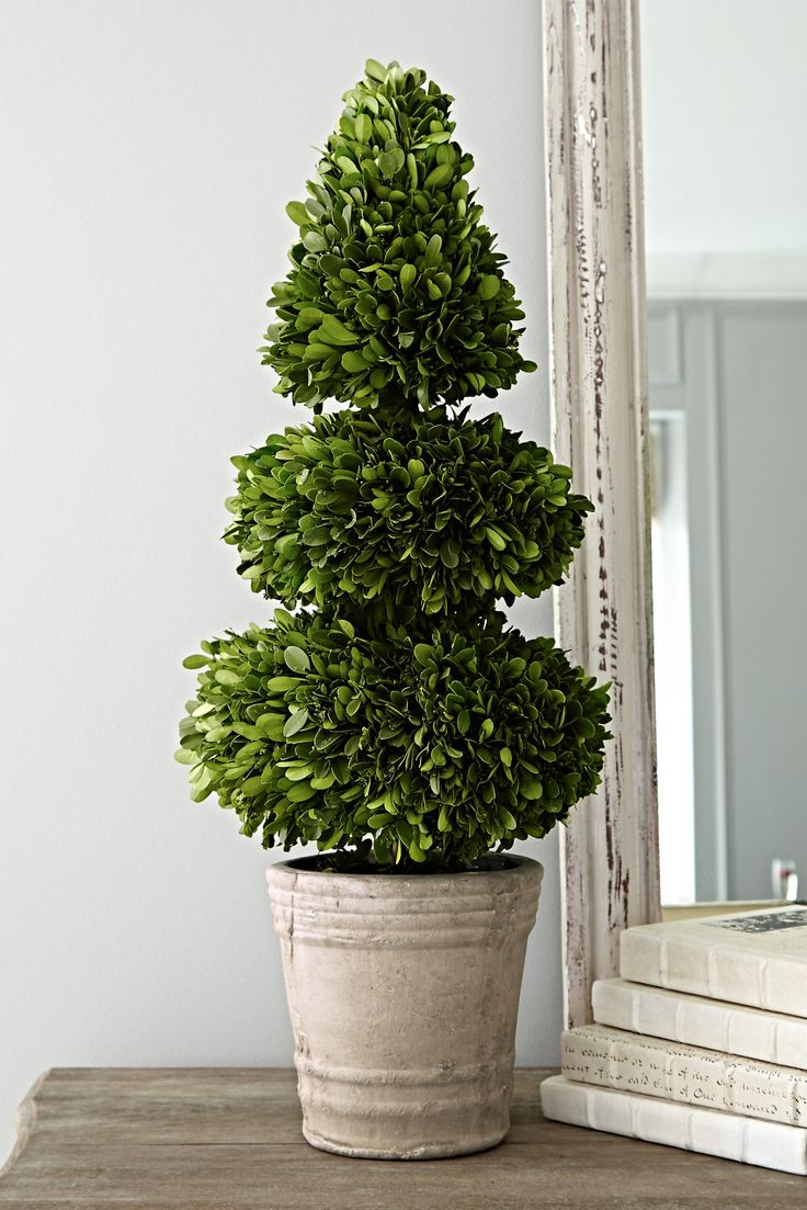 Our Boxwood Topiary is crafted from preserved boxwood.  Use it year round for a festive flair and a touch of greenery.