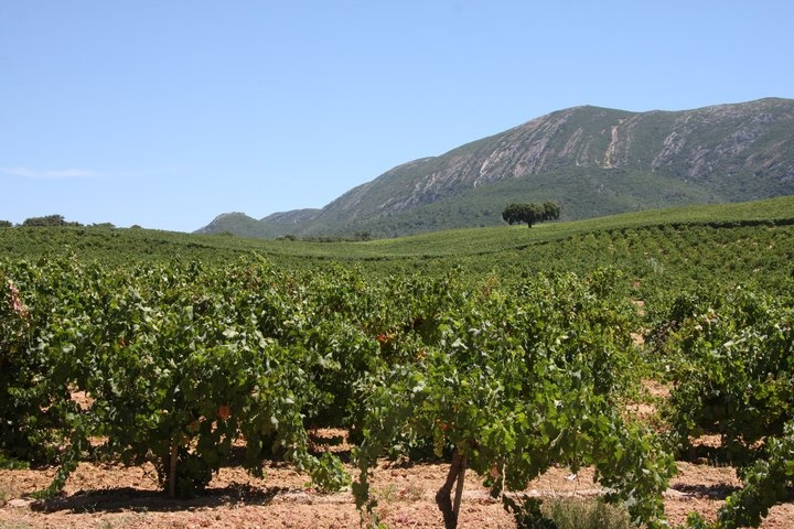 Large vines and properties at Azeitão.