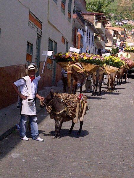 Desfilando por Concordia como la unica Mini Mulita de Carga!!Me aplaudieron Mucho! La   gente encantadora! Quiero volver!     Cortesía: CRIADERO VILLA LUZ, Girardota, Antioquia   (Colombia).