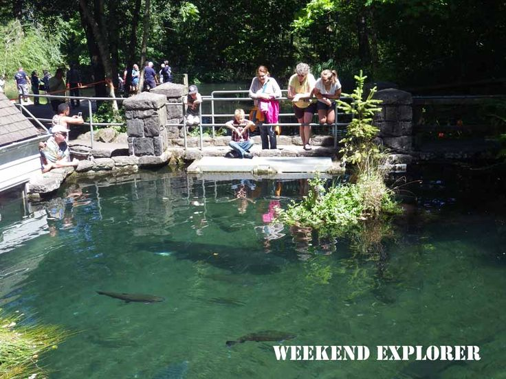 17 best images about things to do in portland oregon on for Fishing in portland oregon