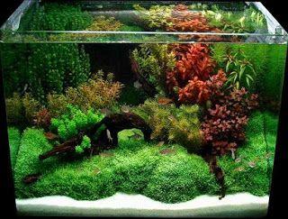 aquascape tanaman plastik,cara menghias aquarium dengan tanaman,dekorasi akuarium kecil,harga rumput plastik per meter,hiasan akuarium plastik,rumput plastik aquarium,