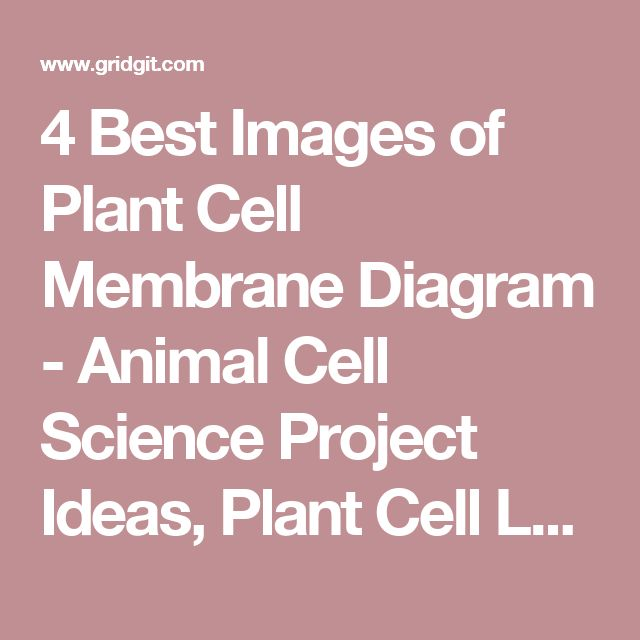 4 Best Images of Plant Cell Membrane Diagram - Animal Cell Science Project Ideas, Plant Cell Lysosome and Animal Cell Organelle Coloring Sheet / cleanri.com