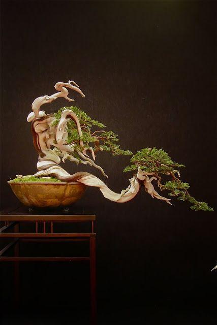 JPB:Bonsai Collection5 | Fighting Bonsai... Traditional Art. European Bonsaï San Show 2013, Saulieu France