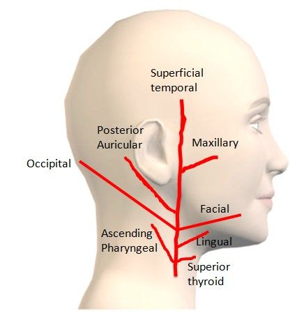 How to Remember the branches of External Carotid Artery (ECA)? ~ MedchromeTube - Best Medical Videos
