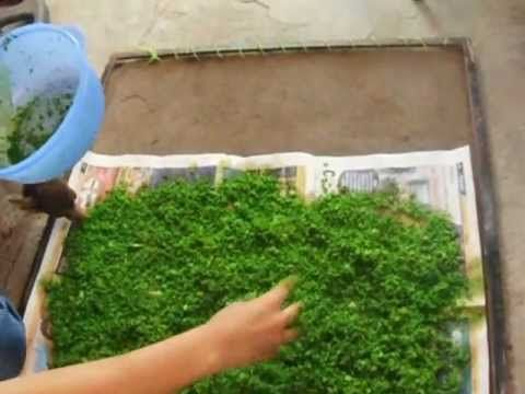Hacer musgo artificial para maquetas con  serrin