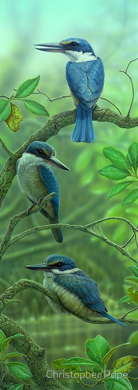 ~~Sacred Kingfishers by Christopher Pope~~