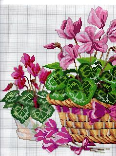 Purple Cyclamen