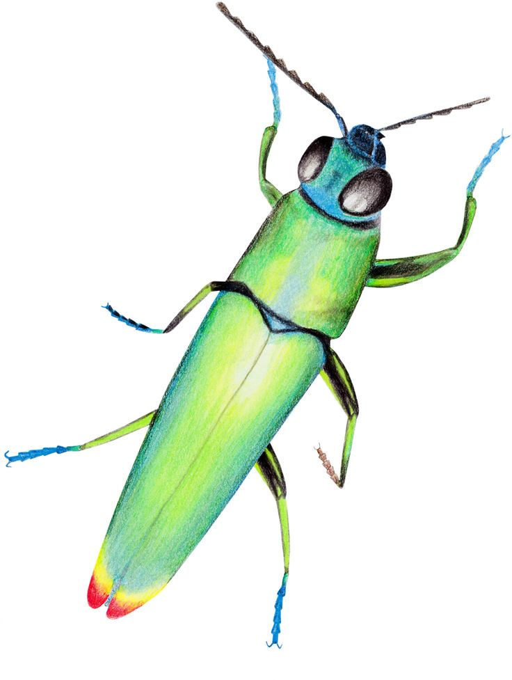 Celebrating the Last Bug in the Tarot Deck by Linda Ursin
