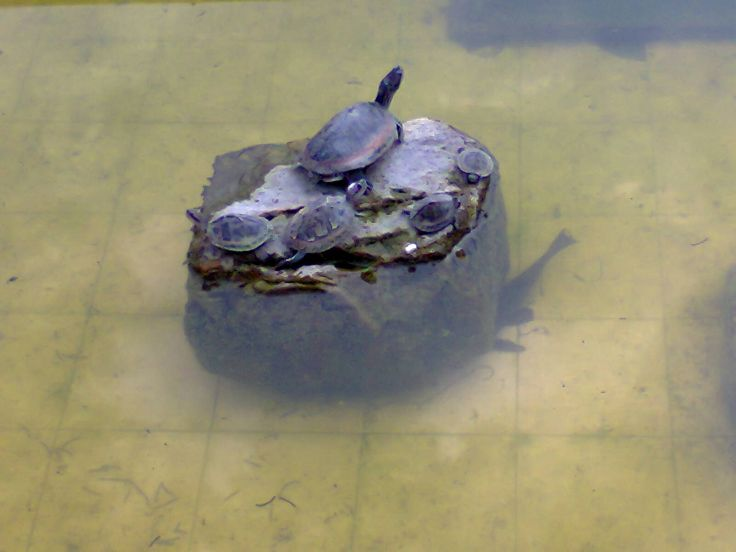 Tortoise Family....... https://plus.google.com/102940345414032040681/posts/4jTN5yLR581